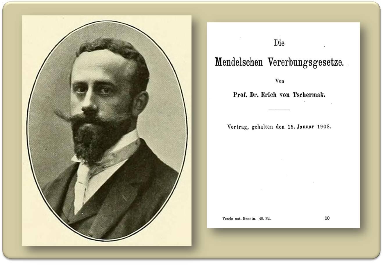 20 Jahre Mendelsche Vererbungsgesetze   Erich Tschermak ...